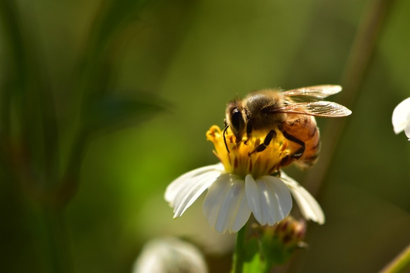 insects-2061033_960_720